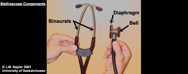 Stethoscope components (copyright J.M. Naylor 2001 University of Saskatchewan)